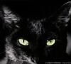 Аватар для Katty Nikolaeva